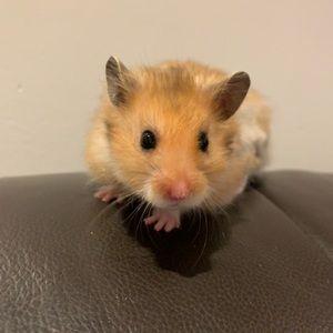 Hamster, big fat balls. ALPHA MALE🖤